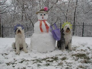 Snow Dogs Enjoy Our Spring Weather