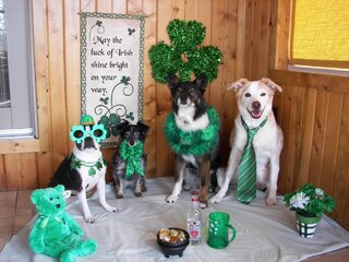 Happy St. Pats Day. The 4 Haas Girls