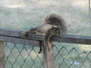 Mr. Squirrel says.. It's So Hot!