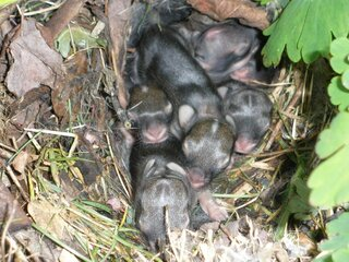 Backyard Baby Bunnies
