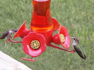 Time of the year for hummingbirds.
