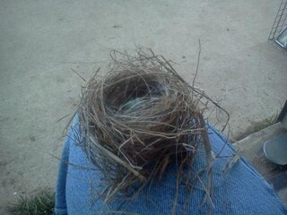 green recycled birdnest