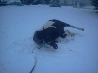 Even our horse has fun in the snow