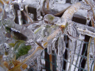 Dec. 2008 Farmington's Ice storm
