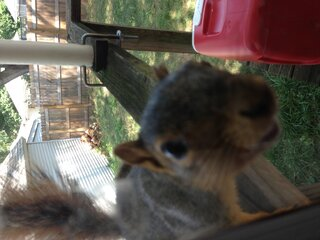 Squirrels begging for food