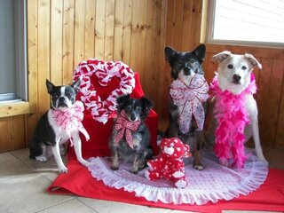 DOGGONE SWEET Valentine's Day!
