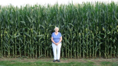 Corn Grows Tall In Lake Camelot