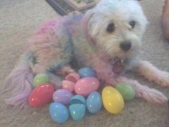 It's JaiJai the Easter dog!