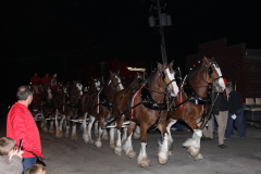 Budweiser Clydesdales come to Wyoming!