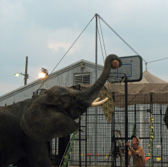 HOI Elephant Slam Dunks