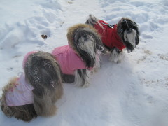We love our winter parkas and snowy days