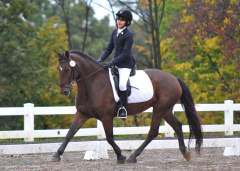 Day 1 - Hunter Oaks Horse Trials