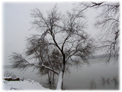 Winter snow on the rising Illinois River