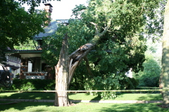 Tree down in historic Bloomington area