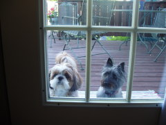 It's too hot out here.  Let us in!!