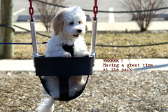 Puppy's first swing