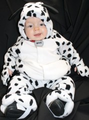 Presley the cutest dalmation puppy
