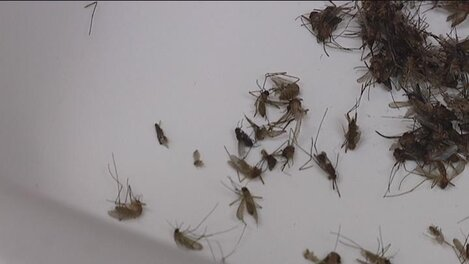 South Carolina Navy complex: West Nile in some mosquitoes