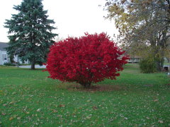Memeorial Burning Bush