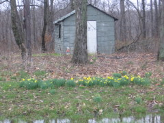 Spring is sprung is southern Illinois
