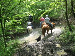 Horse trails well ridden at Moraine View