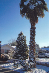 Northern Brings Snow to New Mexico