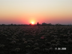 Sunset with lots of pumpkins!!