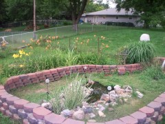 My Garden/Turtle sanctuary