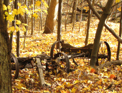 Old Wagon In Woods
