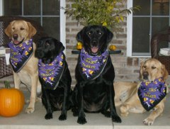 Bo, Bailey, Daisy and Duke, Halloween 10