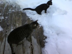 my two inside cats like to go outside oh