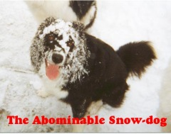 Abominable Snow-Dog in El Paso