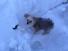 Holly helps shovel
