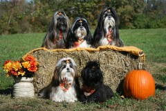 Fall Photo of the Furry Kids