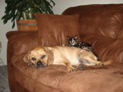 Odie and Cami relaxing