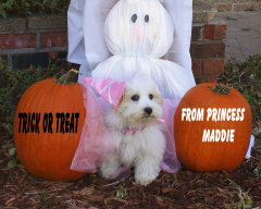Princess Maddie and her first Halloween