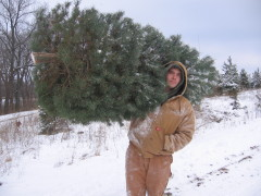Strong man with our Christmas tree.