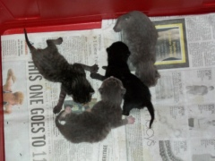 Olivia's kittens 2 days old