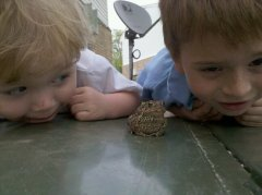 2 Boys and a Toad