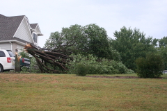 Tree Downed by Storms