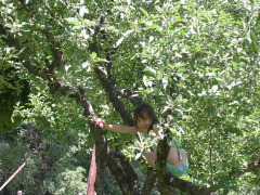 Niece in the apple tree