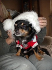 scamp s 4th christmas