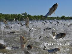 Flying fish blowup on the Illinois River