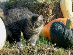 Simom checking out pumpkins