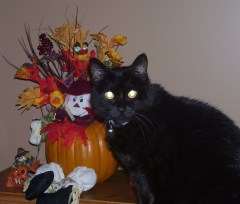 Spooky cat shows Halloween spirit.