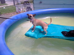 daisy in the pool