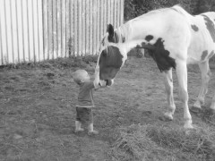 Precious child petting a wonderful horse