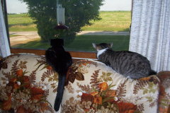 Watching the Hummingbirds