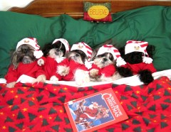Tzu Kids waiting for Santa