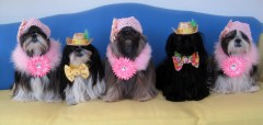 Shih Tzu Gang in their Easter Bonnets